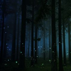 firefly forest ~ This picture reminds me of a sweet night in a Michigan forest with someone from Finland, who had never seen fireflies before. Night Circus, Wow Art, All Nature, To Infinity And Beyond, Nocturne, Beautiful World, Beautiful Places, Night Skies, Faeries