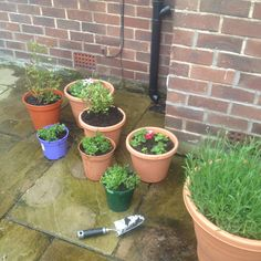 Into #container #gardening. Hoping to transform my patio!