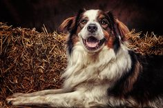 a lovely dog by Danny Block on 500px