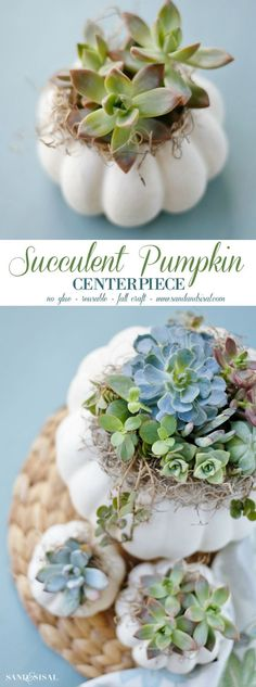 Ease into fall with a gorgeous DIY Succulent Pumpkin Centerpiece. This easy fall… Ease into fall with a gorgeous DIY Succulent Pumpkin Centerpiece. This easy fall craft requires no glue, is reusable, and makes a great hostess gift! Suculentas Diy, Cactus Y Suculentas, Succulent Centerpieces, Diy Centerpieces, Quinceanera Centerpieces, White Pumpkin Centerpieces, Centrepieces, Easy Fall Crafts, Fall Diy