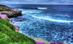 Check out La Jolla Cove Beach on Roadtrippers