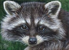 Google Image Result for http://www.akiko-watanabe.com/images/ACEO-Raccoon-03.jpg