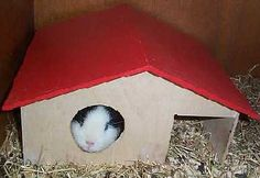 Cavia home Small Animals, Guinea Pigs, Pets, Animals And Pets