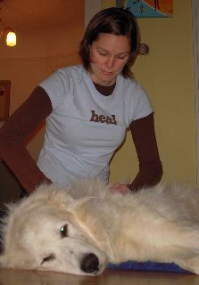 Massage is a holistic treatment your dog is sure to enjoy