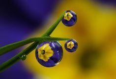 Fantastic Dew Drops Photography