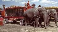 Image result for circus animal carts