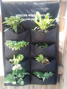 8 pocket vertical planters...$25 (plus post) Safe sturdy felt; stable in wind; above slugs and snails; ideal for small space balconies.  No bend or mess