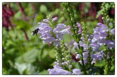 Insects, bees & butterflies are enjoying the many different flowers in De Bloementuin.