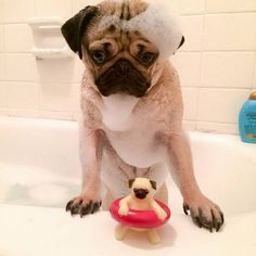 Doug the Pug - bath time
