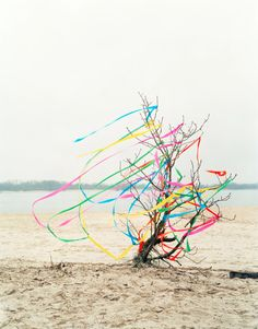 Streamers in the desert by Color by Oliver Schwarzwald