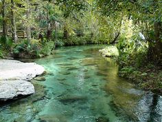 Kelly Park Rock Springs Apopka: We are getting married on that rock to the left!!! :)
