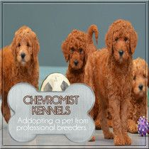 Understanding The Importance Of Dog Training As Shared By Chevromist Pet Corner, Regular Exercise, Training Your Dog, How To Better Yourself, Dog Care, Dog Owners, Dog Breeds, Adoption, Teddy Bear