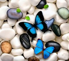 BLUE AND WHITE - WHITE, BLUE, BUTTERFLIES, STONES