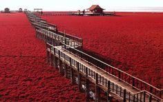 blood red sea in china | BIOGRAFÍAS DE ARTISTAS PLÁSTICOS ,ESCULTORES Y MUSEOS DEL MUNDO ...