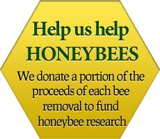 Live Honey Bee Removal & Relocation - Pest Control Specialists