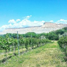 Welcome to the Wine Country of Colorado! Who needs Alsace or Napa Valley when you've got this awesome gem of Palisade right in your home state? A say touring the vineyards and tasting wines was a fantastic finish to our long weekend - good wines sunshine and a warm summer day!  #palisade #palisadecolorado #colorado #visitcolorado #coloradolive #cometolife #wine #viini #vineyard #viinitila #winetour #winetourism #coloradowine #travel #matka #reissu #kesäloma #loma #mondolöytö #skimbaco…