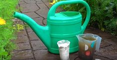 Készítsd el ezt a keveréket, ha azt szeretnéd, hogy rengeteg paprikád teremjen! - Filantropikum.com Watering Can, Canning, Gardening, Sun, Plant, Red Peppers, Lawn And Garden, Home Canning, Horticulture