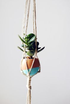 the red thread succulent egg garden single