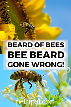 Bee Bearding | Beard Of Bees | Bee Beard GONE WRONG! #bees #beekeeping #honey #beebeard #beebearding #pets #animals #beekeeper Animals For Kids, Farm Animals, Animals And Pets, Funny Animals, Beekeeping Supplies, Beekeeping Equipment, Pet Nutrition, Animal Nutrition, Animal Quotes