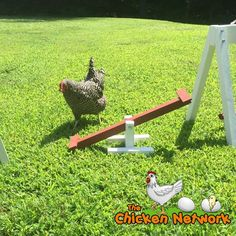Amish Made Chicken Teeter Totter / SeeSaw Small Chicken Coops, Easy Chicken Coop, Chicken Coop Plans, Building A Chicken Coop, Diy Chicken Toys, Chicken Ideas, Amish Chicken, Chicken Recipes, Chicken Scratch