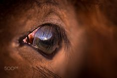 World within de Vahlenkamp Perpetual Motion, Longer Eyelashes, Depth Of Field, Animal Photography, Animals And Pets, Horses, World, Lens, Middle
