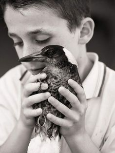 Rescued Magpie and the inseparable friendship with a young boy
