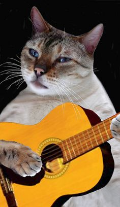 how to play animals on guitar