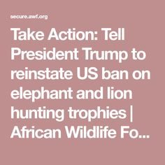 Take Action: Tell President Trump to reinstate US ban on elephant and lion hunting trophies | African Wildlife Foundation