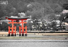 Adictos a los viajes: Cómo ir de Kyoto a Miyajima en tren