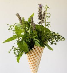 ... + images about HERBS on Pinterest   Fresh herbs, The herbs and Basil