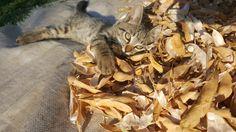 #Cute #miauu #pisi 😊😍