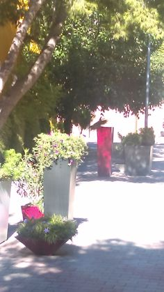 Jardines del Campestre.