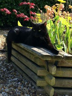 Beautiful Black Cat (Oliver Tom Cat's beautiful Uncle Jack)