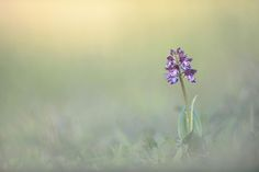 Orchidée by Christopher Mouisset on 500px