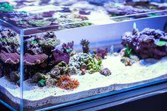 The Hobby Of Saltwater Aquarium Fishkeeping Aquarium Sump, Nature Aquarium, Aquarium Design, Marine Aquarium, Aquarium Fish Tank, Saltwater Fish Tanks, Saltwater Aquarium, Planted Aquarium, Freshwater Aquarium