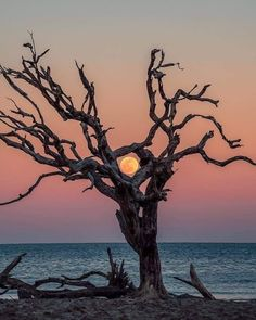 Blood moon on the rise Jekyll Island Beautiful Moon, Beautiful World, Jekyll Island, Hippie Art, Blood Moon, Closer To Nature, Belle Photo, Beautiful Landscapes, Mother Nature