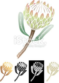 The iconic national flower of South Africa, originating from the Cape. The iconic national flower Protea Art, Protea Flower, Free Vector Graphics, Free Vector Art, Lino Art, African Tattoo, Hedging Plants, Stencil Patterns, Plant Illustration