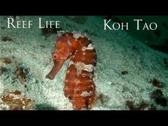 Great motivation for any underwater project. I've used it with elementary and middle school. Reef LIfe - The HD Underwater Video from Koh Tao, Gulf of Thailand