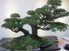 Movement and Flow in Bonsai | Bonsaiplace