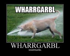 What dogs say when they try to eat the sprinkler.