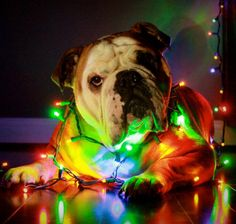 This would be cute with the kids laying next to Bugsy...hopefully he won't try to chew the lights, though!