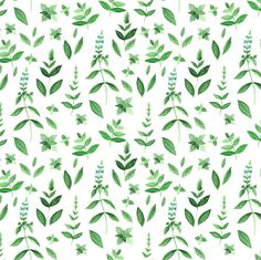 Watercolor basil fabric by dariara on Spoonflower - custom fabric