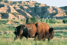 The Five National Parks in North Dakota to Explore