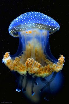 What Do Jellyfish Eat? Jelly fish are beautiful creatures. There is of water in their bodies but still they flow along with the flow of water. These creatures eat meat and mate constantly. Beautiful Sea Creatures, Deep Sea Creatures, Animals Beautiful, Deep Sea Animals, Wild Animals, Creatures 3, Baby Animals, Nature Animals, Funny Animals