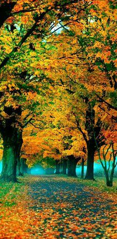 Fall photograph autumn leaves nature photography print sleepy hollow orange…