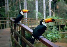 Parque das Aves -Foz do Iguaçu