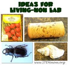 Ideas for Living-Nonliving Lab Stations: STEMmom.org - part 2 including a video of the glue monster lab that kids can watch if you cannot do it yourself on the lab day