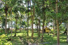 Cacnipa Island: Palawan