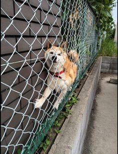 シュールだけどカワイイ!?壁と網の間に挟まっている犬が話題
