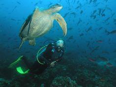 Galapagos Islands | Tortuga de las Islas Galápagos/crusader